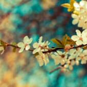 Flowers-vintage-photography