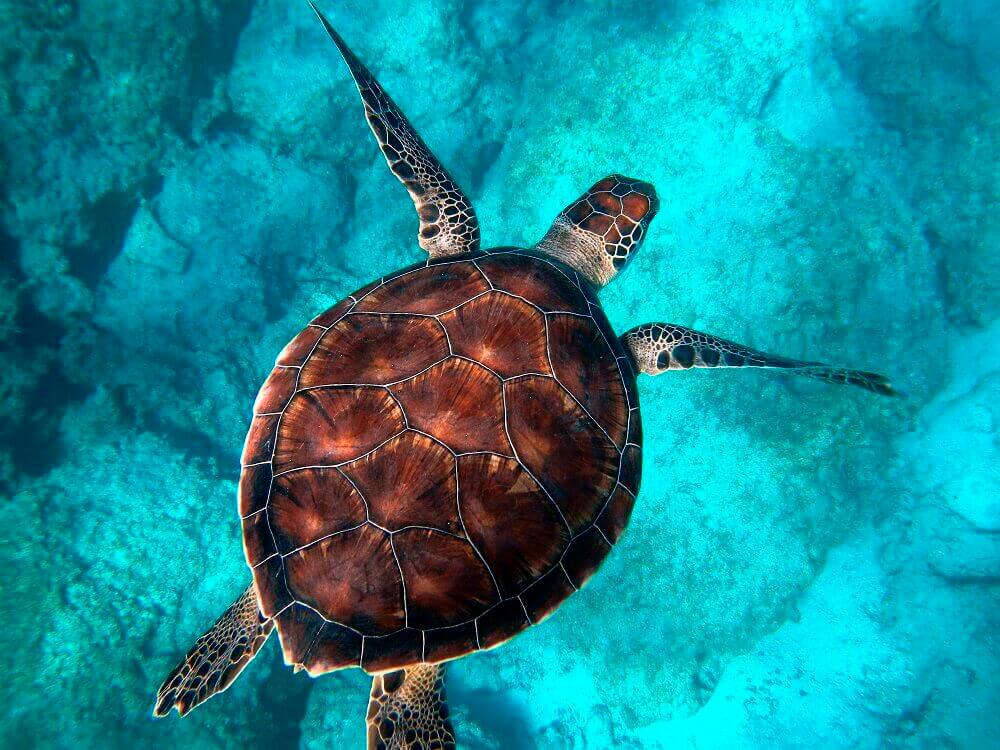 Flying Tortoise